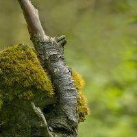 Лесной единорог :: Валерий Талашов