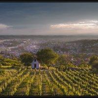 Daruvarski vinogradi :: Matej Turbić