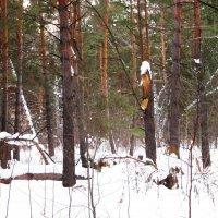 В сказочной лесной стране . :: Мила Бовкун