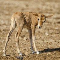 В пустыне Арава :: Владимир Горубин