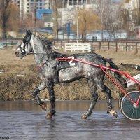 Серая :: Виктор Марченко