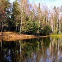 Лесное озеро :: Виктор Филиппов