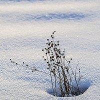 Борьба со снегом. :: юрий Амосов