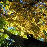 Осень :: Яна