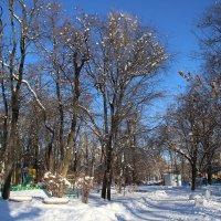 Зима, парк :: Леонид