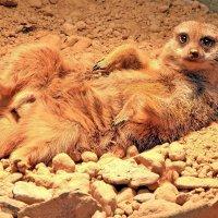 Я на солнышке лежуууу... :: Alexander Andronik