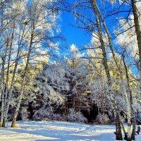Зима-завируха :: Ида Слизких