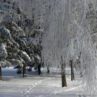 белое одеялко. :: Наталья Бридигина