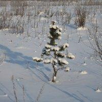 В лесу родилась елочка... :: Вера Андреева