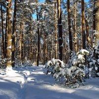 Заблудилась тишина в лесу... :: Лесо-Вед (Баранов)