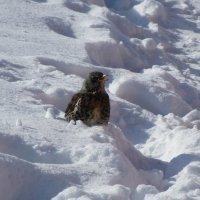 в снегу :: tgtyjdrf