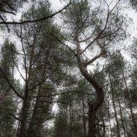 Танцующий лес :: Kasatkin Vladislav
