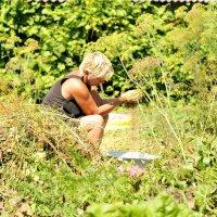 жизнь в деревне :: ольга каверзникова