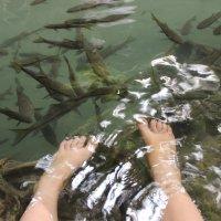 Рыба :: Наталия Есина