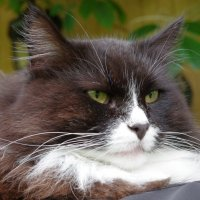 мой кот :: Jeanne B
