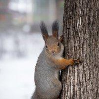 Орехи есть? :: Alex Bush