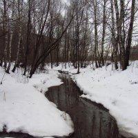 Когда повеет вдруг весною в январе - IMG_0334 :: Андрей Лукьянов