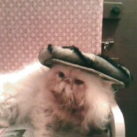 Любимый кот-Миша :: Людмила