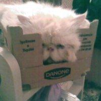 Мой кот-обожает лыбые коробки :: Людмила