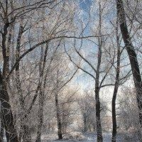 Морозный день. :: Лилия *