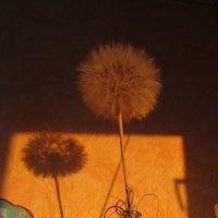 утреннее солнце на стене :: tgtyjdrf