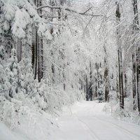 белым снегом... :: Olga