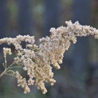 Просто трава :: Надежда Чернышева