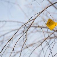 Одиночество :: Евгения