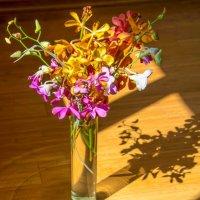 Букет орхидей :: Любовь Потеряхина