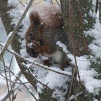 Зима зимой,а обед по расписанию... :: Тамара Румянцева