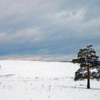 Одиночество. :: Светлана Иванчина