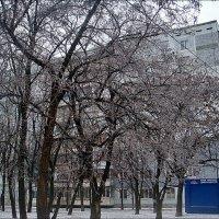 В ледовом панцире застыли, во сне как будто замерев... :: Нина Корешкова
