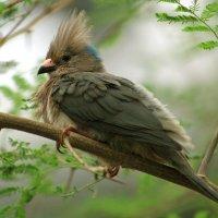 Птица-мышь :: Alexander