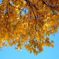 осенние листья :: Елена Семигина