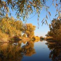 Осень в пойме :: Ларсен Кивалин