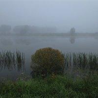 туманным утром :: Елена