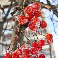 Художества зимы :: Лидия (naum.lidiya)