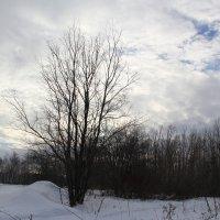 Зимой не яркие краски :: Наталья Дмитриева