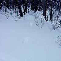 Спасительный лес... :: Андрей Синицын
