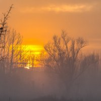 Золотой закат в тумане :: Aнатолий Бурденюк