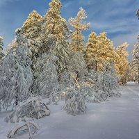 Зимний этюд :: vladimir Bormotov