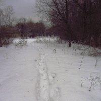 Продолжение не цветной зимы - IMG_0527 :: Андрей Лукьянов