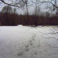Продолжение не цветной зимы - IMG_0538 :: Андрей Лукьянов