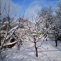 Снежное утро :: Татьяна Пальчикова