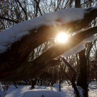 солнце краденое :: Валерия Шамсутдинова