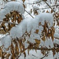 Зима в деталях :: Константин Бобинский