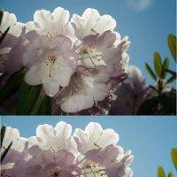 Цветы как цветы. :: Светлана Войтович