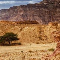 Тимна парк, пустыня Арава, Израиль :: Владимир Горубин