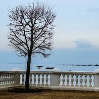 Дерево :: Tatyana Smit
