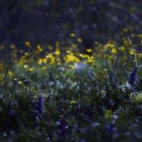 Дух леса :: Анна Сулоева